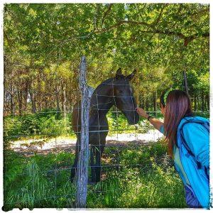 @laura_naturalmente Mis amigos los caballos - Haciendo amigos por la ruta de A Estrada