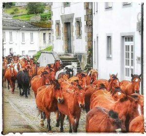 Mondoñedo ciudad Pueblo de Mondoñedo As San Lucas de Mondoñedo. Caballos en las calles de mondoñedo- Caballos por la Calle de Álvaro Cunqueiro